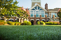 Image of residential lawn with home in background