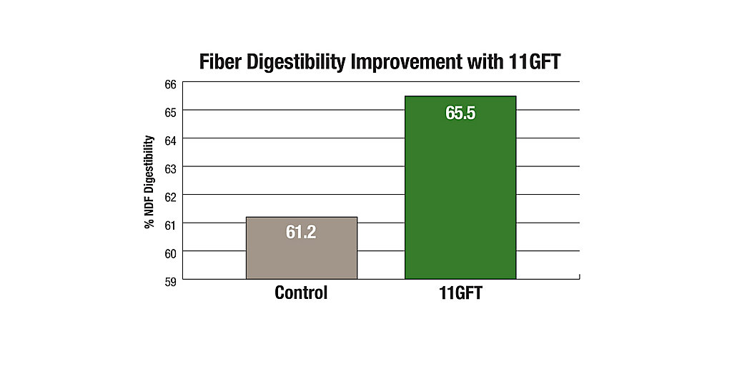 11GFT Fibre Digestibility Improvement Chart