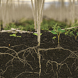 Stubble and roots with weeds