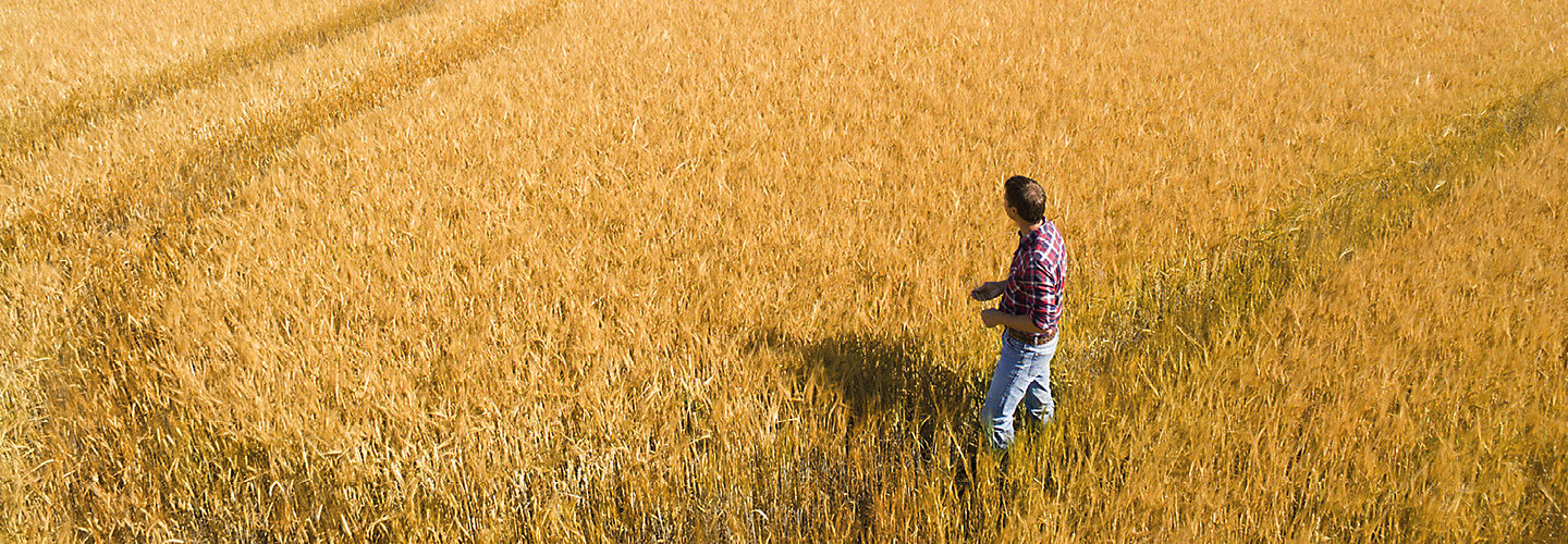 Farmer in cereal field
