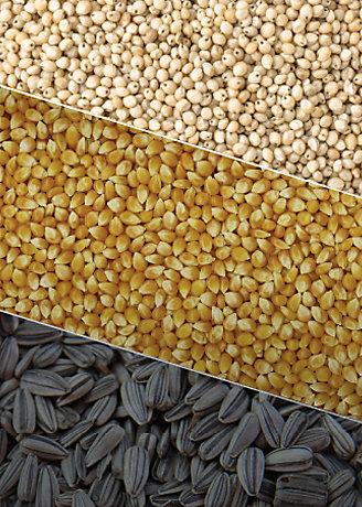 Collage de las 3 semillas divididas por diagonales. Girazon, maíz y sorgo.