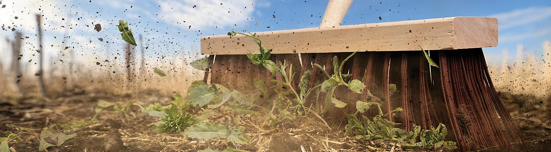 Pre-Seed Clean Sweep