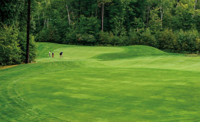 Image of golfers on course