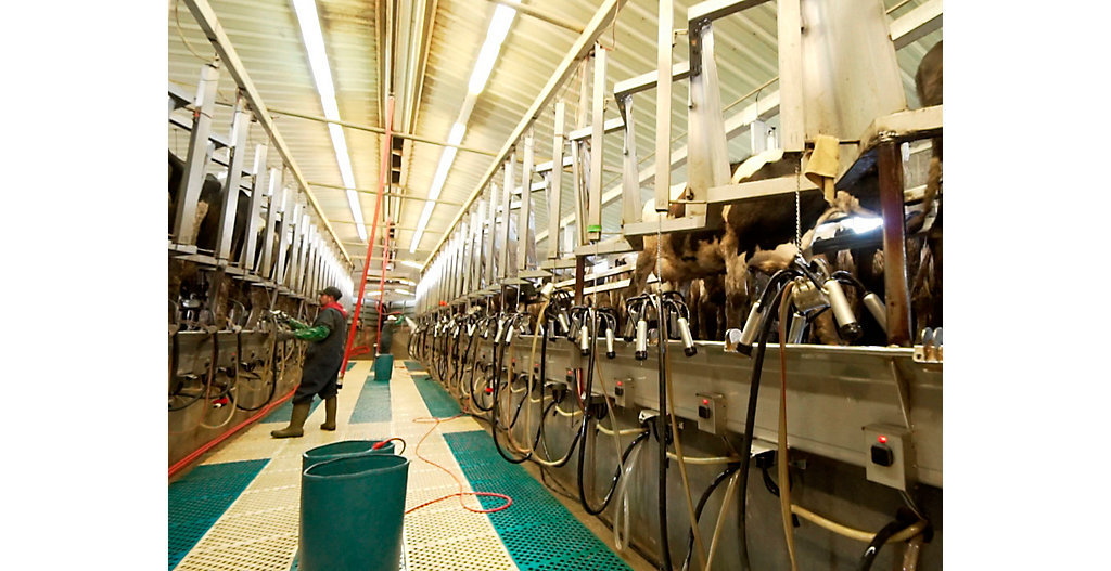 Cleaning milking parlor