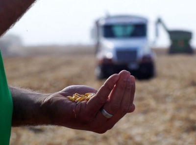 LumiGEN™ corn seed treatment on Pioneer® brand corn products for 2020