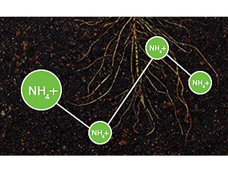 Ammonium in soil graphic