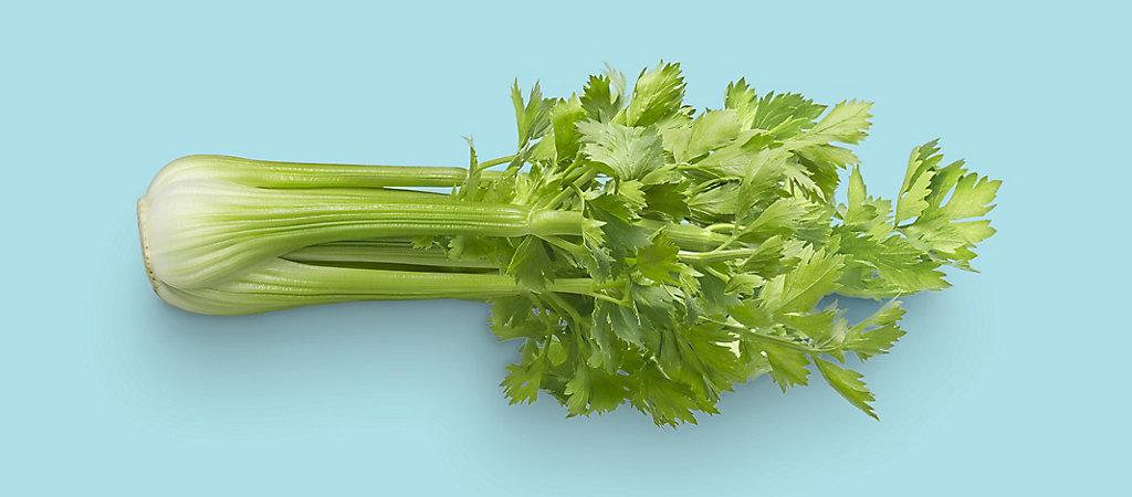 Head of Celery on Blue Background