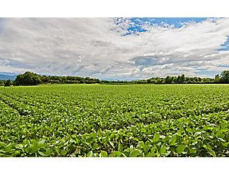 early-season-soybeans-1_beauty_1_64-1