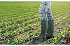 early-season-soybeans-3_beauty_850pix
