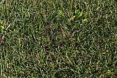 Image of grass and weeds
