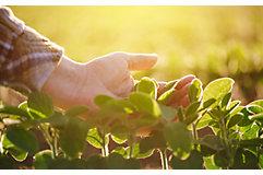hand-inspecting-early-season-soybean-1_850pix