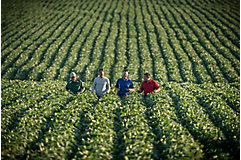 Local Pioneer team walking soybean field
