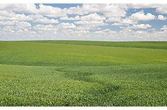 mid-season-wheat-3_beauty_850pix