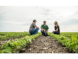 Inspecting soybean field