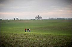 Emergence soybean field