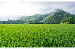 rice-field-mountain-horizon-1_beauty_850pix