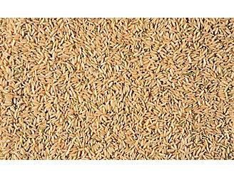 rice-seeds-1_beauty_1_64-1