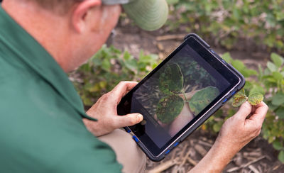Photo - grower looking at tablet in field.