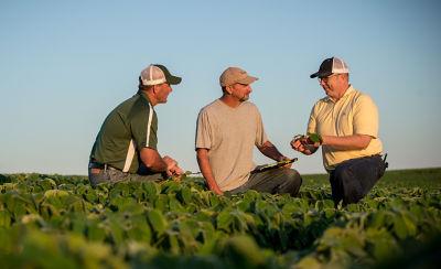 Photo - growers talking in soybean field - midseason