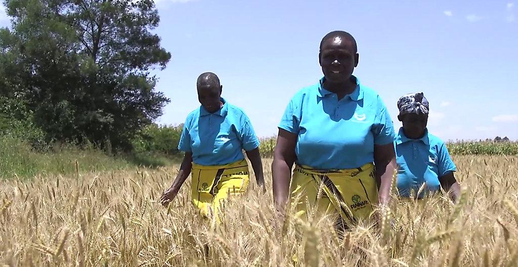 Quênia: Cooperativa de Mulheres de Kurur