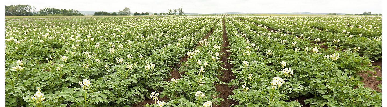 Kartoffel Fungizide Mobile