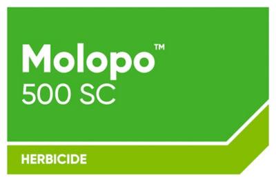 Molopo 500 SC