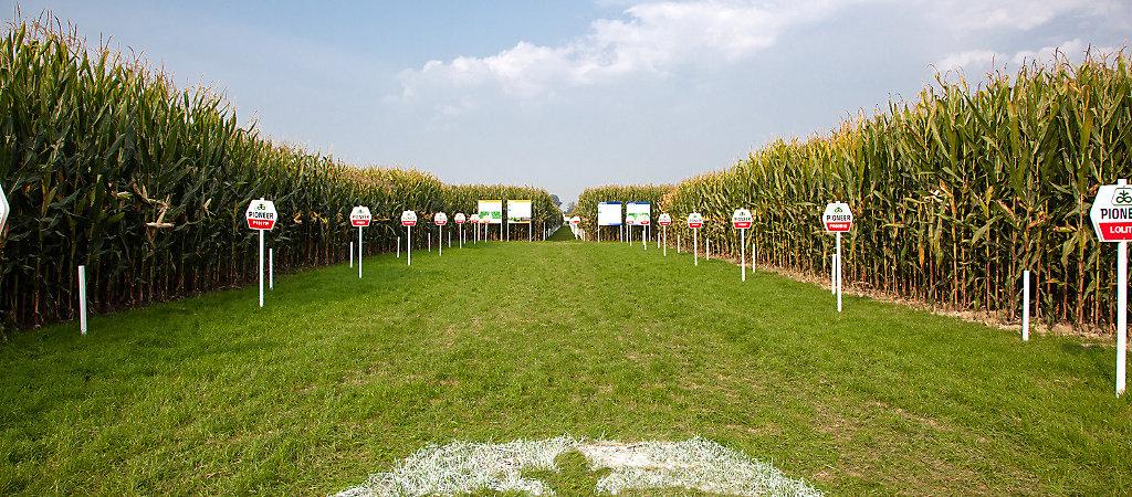 PHI Corns