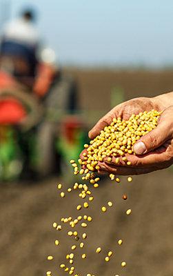 Solution de semences
