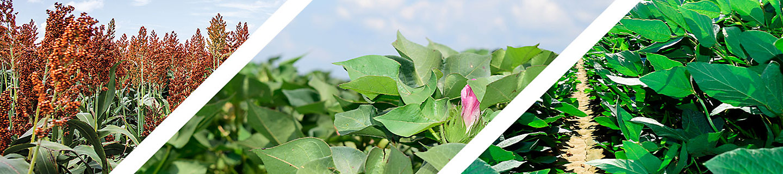 Transform Sorghum, Cotton, Soybean header