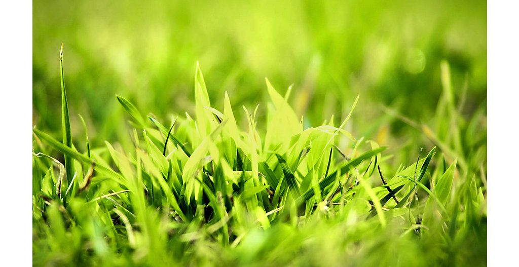 How to identify and control Crabgrass