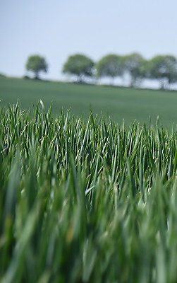 LEAF Corteva - British Countryside