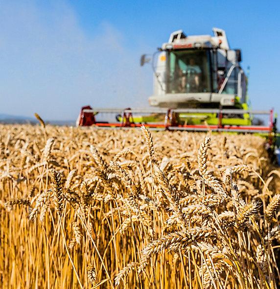 Wheat_Harvester