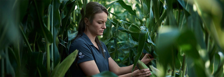 Woman Inspecting Corn