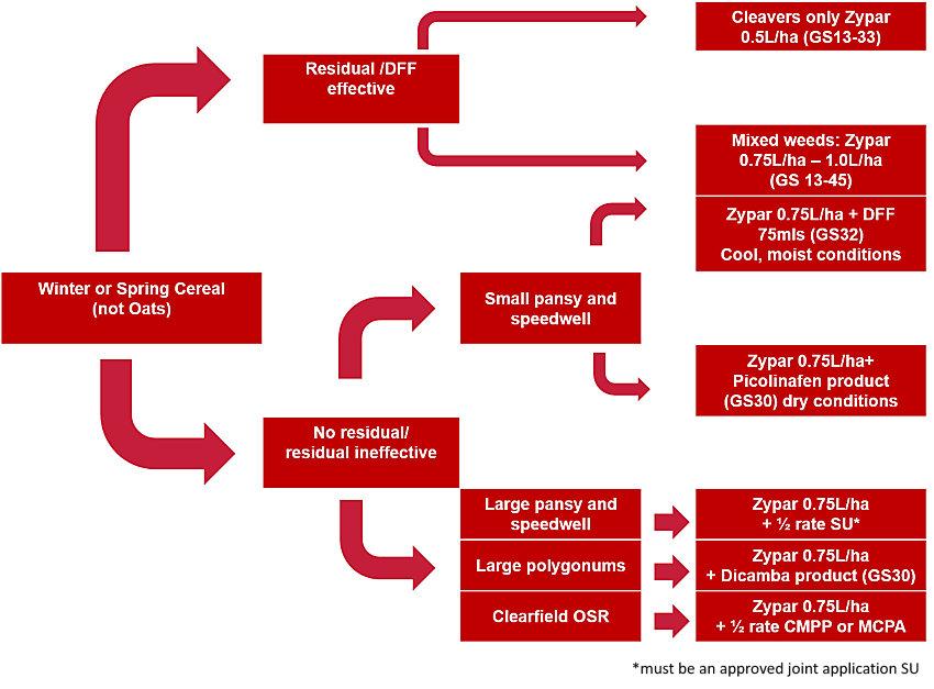Zypar decision tree