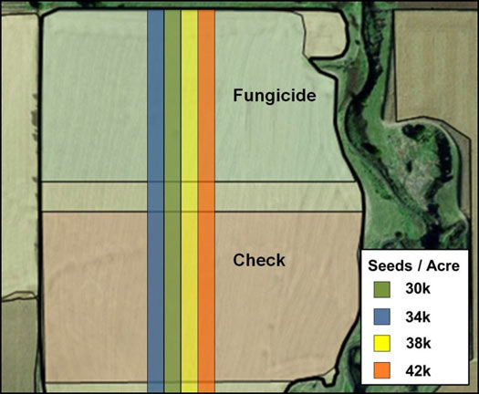 Agronomic trial with 2 variables