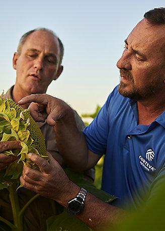 agronomy-konuya-gore