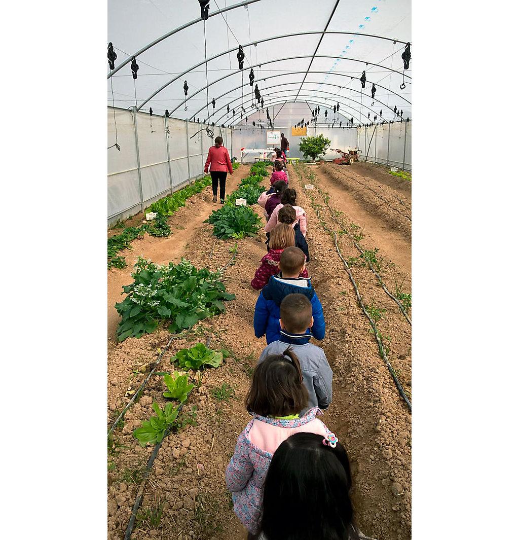 Niños en fila visitando un huerto