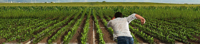 Lumiflex™ seed treatment fungicide