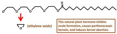 Ethylene oxide is one of the breakdown products of nonionic surfactant in plants.