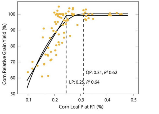 Relationship between yield response and P in corn leaves at the R1 stage.