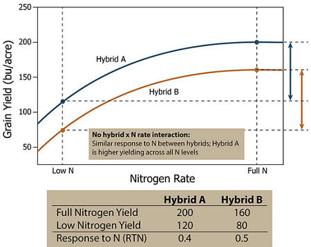 Response of two hypothetical corn hybrids across a range of N application rates showing no hybrid by N rate interaction.