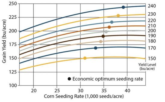 Corn yield response to population and optimum economic