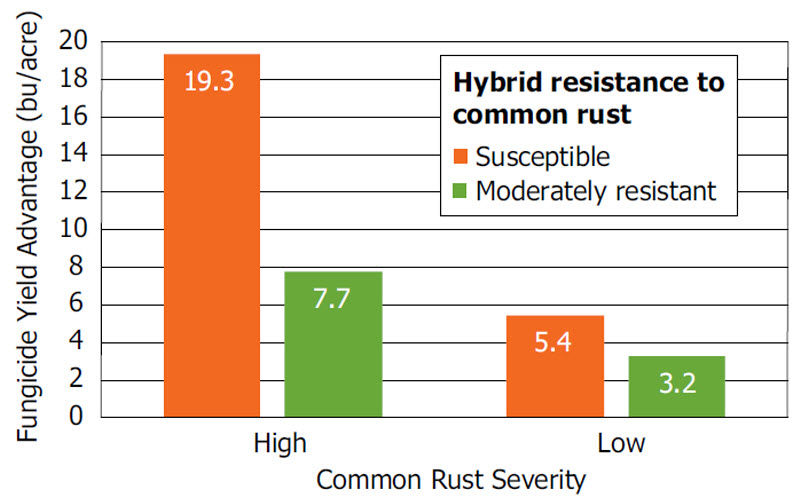 Average fungicide yield response of hybrids with low resistance (3 rating) and moderate resistance (4-6 rating) to common rust in Pioneer small-plot trials.