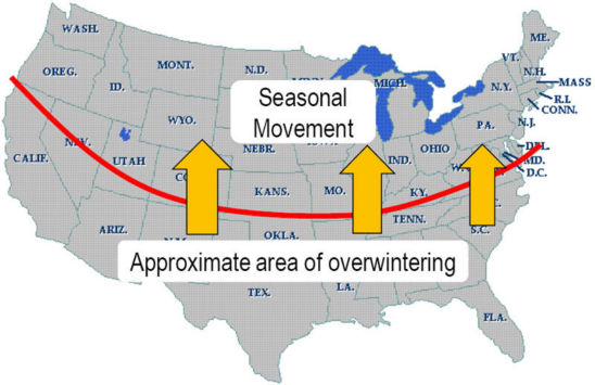 U.S. map showing overwintering areas for corn earworm.