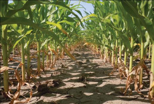 Research plot - nitrogen management