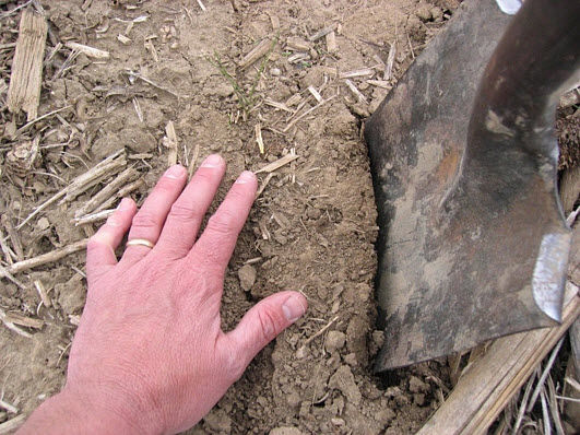 Closeup photo showing how to start digging near seed furrow.