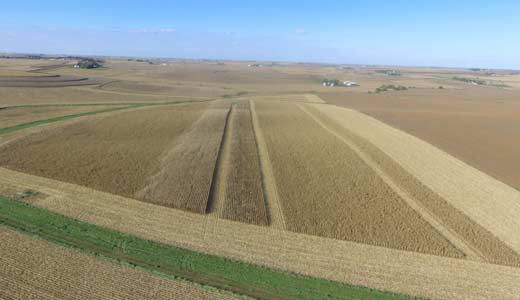 Drone image of field showing corn fungicide treatment vs. non-treated area at harvest timing.