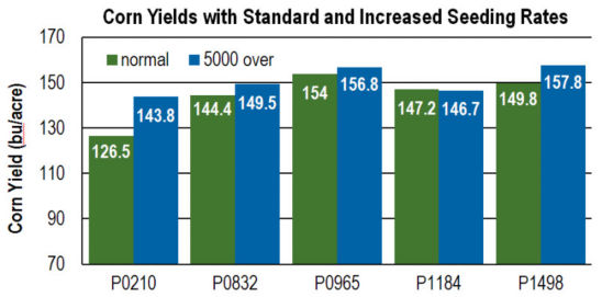 Corn yields with standard and increased seeding rates.