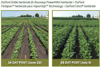 Soybean field treasted with DuPont Enlite herbicide fb Roundup PowerMAX herbicide + DuPont FeXapan� herbicide plus VaporGrip� Technology + DuPont Cinch herbicide
