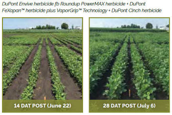 Soybean field treasted with DuPont Envive herbicide fb Roundup PowerMAX herbicide + DuPont FeXapan� herbicide plus VaporGrip� Technology + DuPont Cinch herbicide